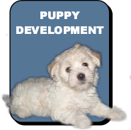Pup class pup dev pic